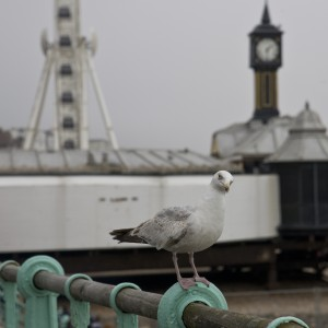Indignant seagull by the pier in Brighton