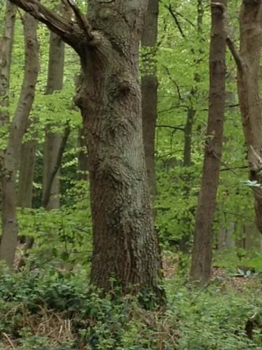 Pareidolia in the Park
