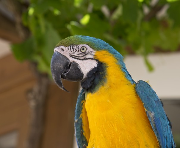 Reg at the Zoo