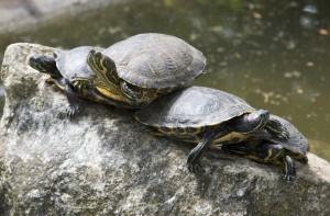 Turtle on the back of a turtle, on the back of a turtle